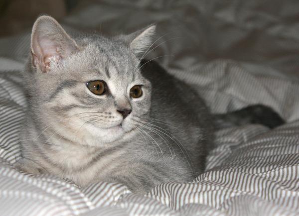 Фото кошки фотоаппаратом Canon 450D