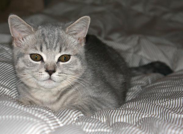 Фотография кошки. Canon 450D