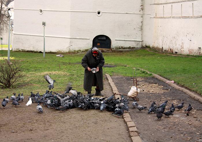 Фото: Бабуля кормит голубей