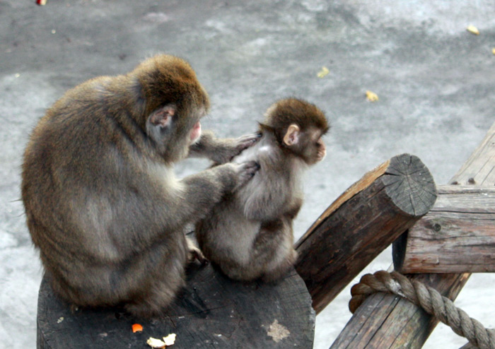 Звери в московском зоопарке