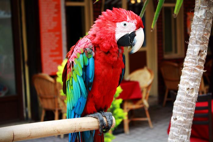 Большой попугай