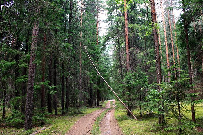 Лес около реки Цна