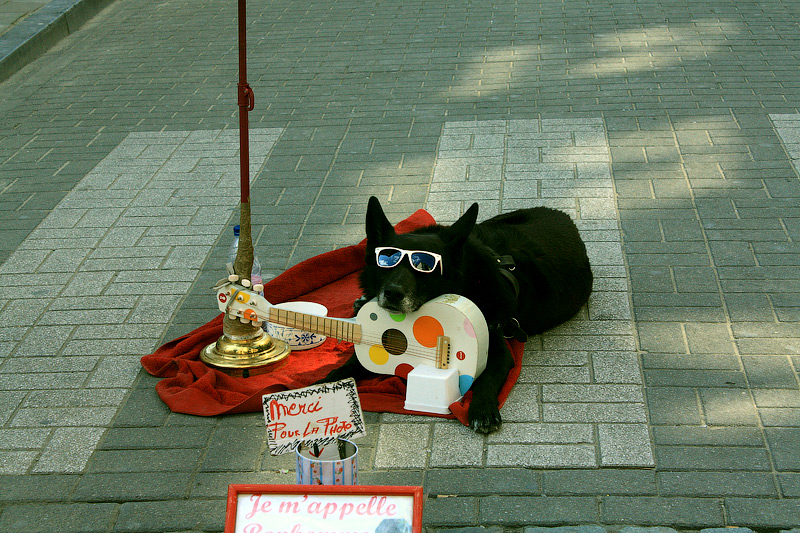 Фото: Собака просит денег