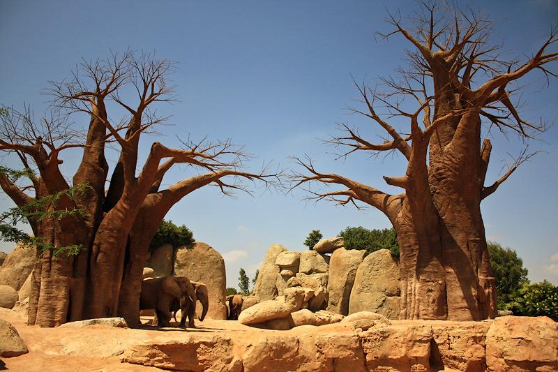 Фото: слоны и баобабы в зоопарке Валенсии
