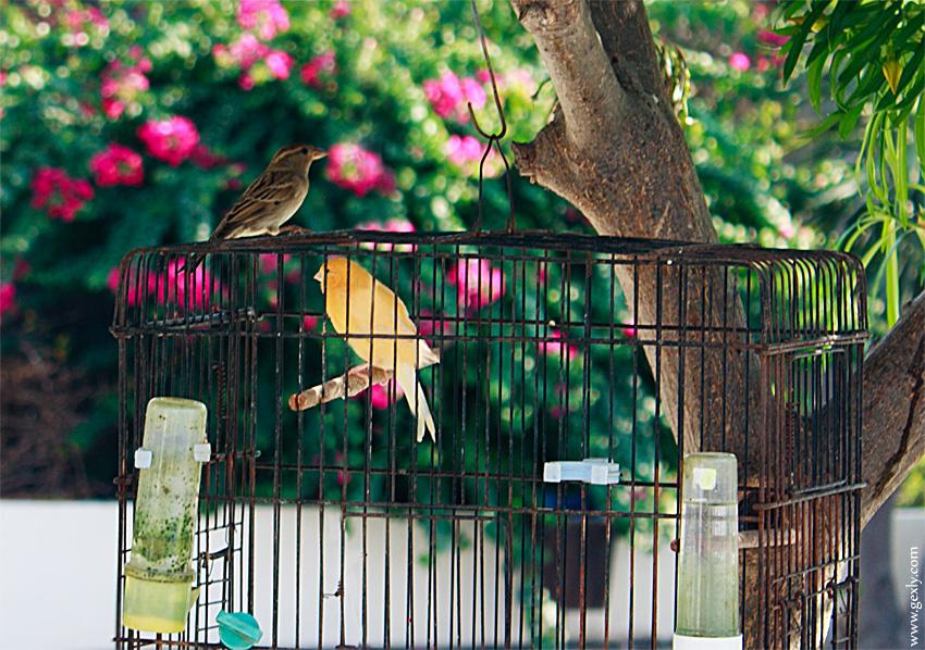 Фото: две птицы в клетке и снаружи