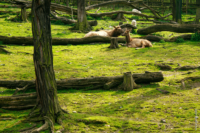 Звери в зоопарке Праги