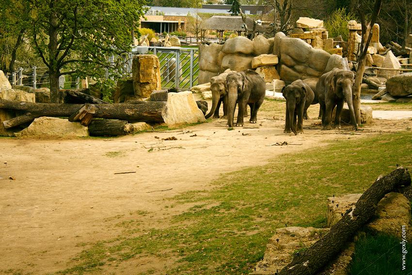 Слоны в Пражском зоопарке